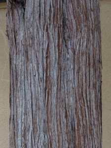 P2090298-1